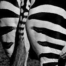 The end of a Zebra by Mick Kupresanin