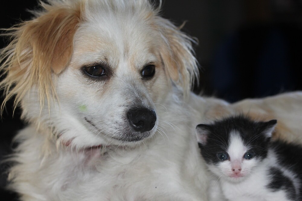 my lovely dog and our kittens by kazzadaz