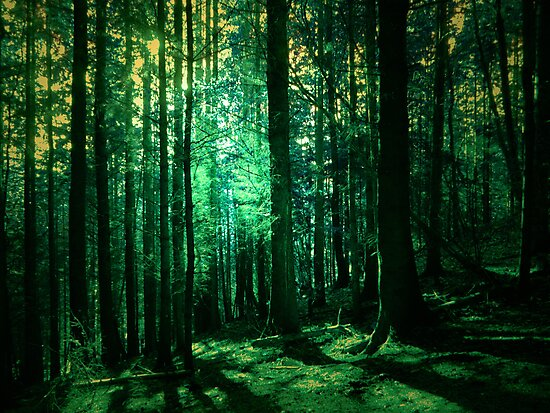 LOST IN THE WOODS by leonie7