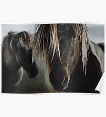 Schließen Sie herauf geraden Blick des Pferds Poster