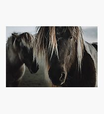 Close up straight look of horse Photographic Print
