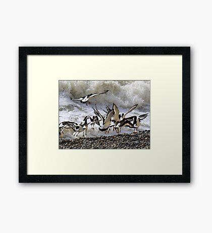 Oyster Dance Framed Print