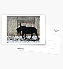 Winter Draft Postcards