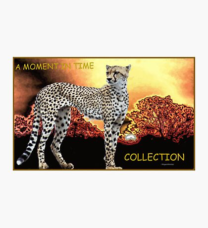 A MOMENT IN TIME - THE CHEETAH COLLECTION Photographic Print