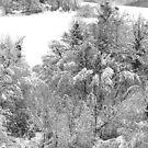 the last March snow by fabio piretti