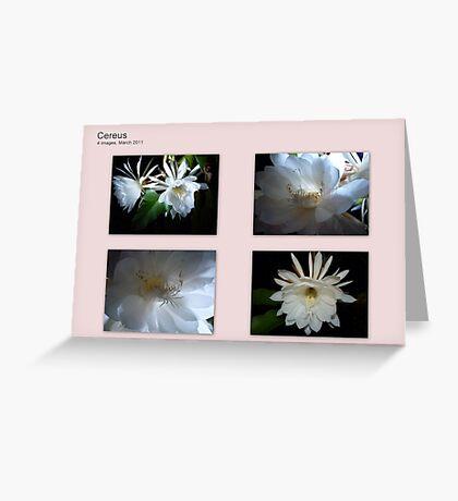 Cereus Cactus collaged Greeting Card