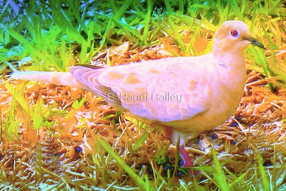 Gentle mourning dove by ♥⊱ B. Randi Bailey