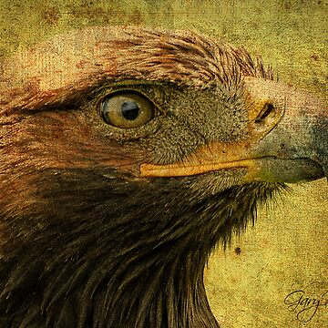 Golden Eagle by Scotsman