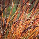 Navajo Grass by Kelly Chiara