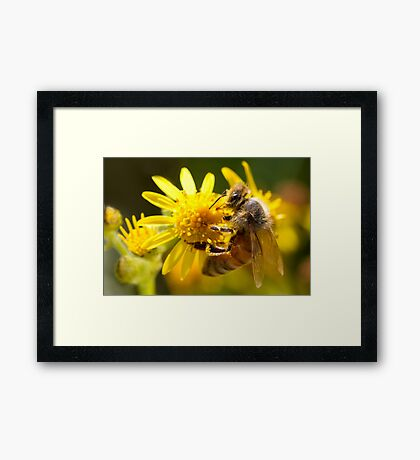 Working Hard Framed Print
