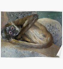 Monkey at Como Zoo Poster