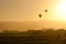 Hot Air Balloons - Yarra Valley by Timo Balk