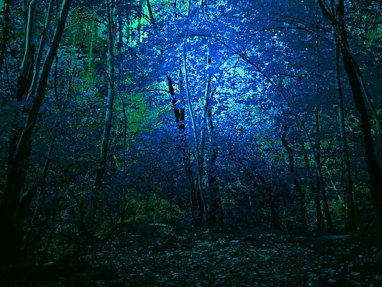 BLUE WOODS by leonie7