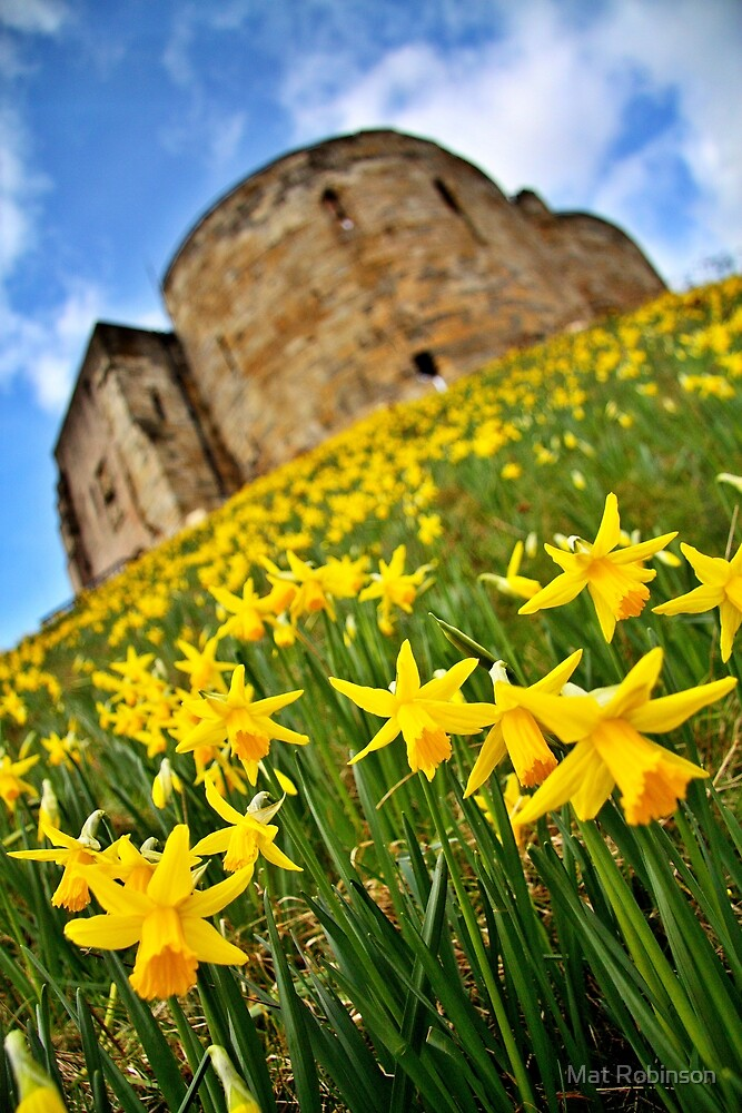 Early Daffodils In York by Mat Robinson