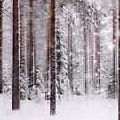 Snow forest by natans