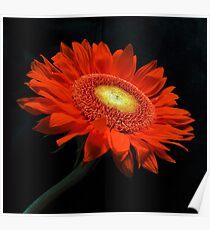 Arancia Poster