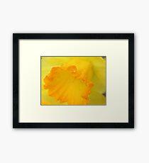 Macro Daffodil Framed Print