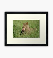Enjoying those ribs! - Kruger National Park Framed Print