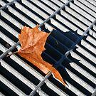 Grate Leaf by Michael  Herrfurth