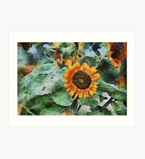 A Touch of the Sun Art Print