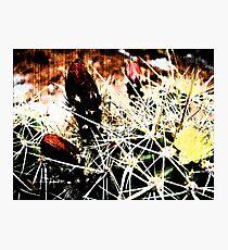 Spine Budding Bloom Photographic Print