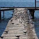 Cray Jetty with Terns by Reef Ecoimages