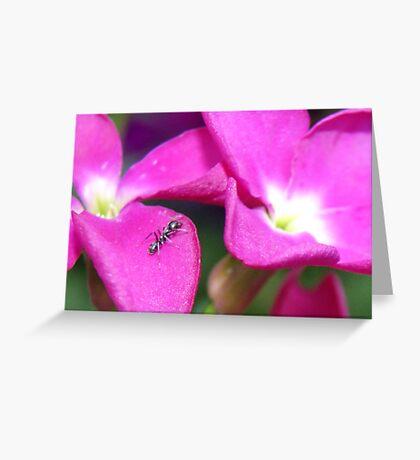 Natures Pillow Greeting Card Greeting Card