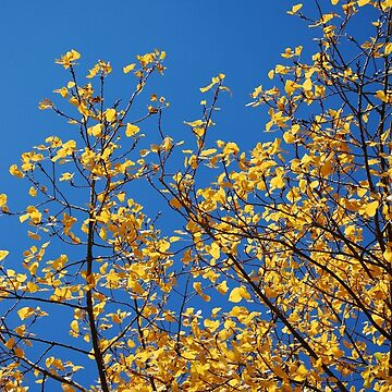 Strong Yellow & Blue Sky by FakeFate