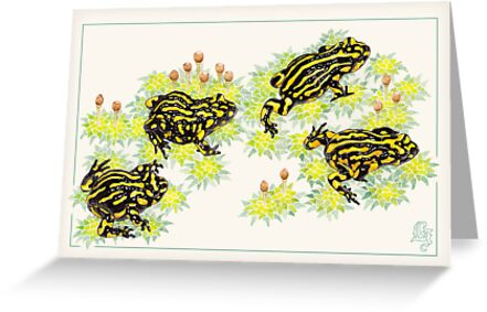 Corroboree frogs (Pseudophryne corroboree) by Laura Grogan