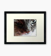 Am Shy Framed Print