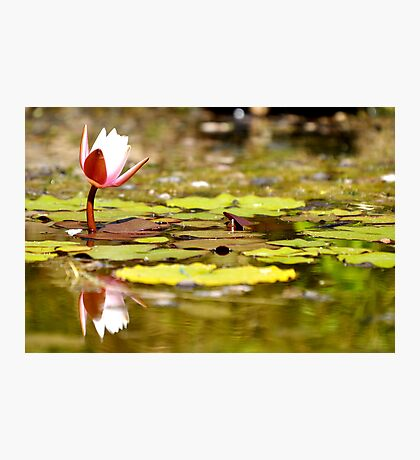 Lonely lilly Photographic Print