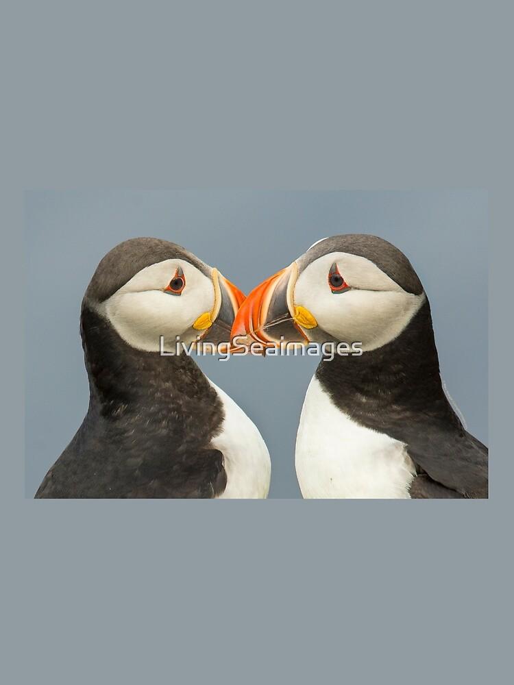 Pair of Atlantic Puffins by LivingSeaimages
