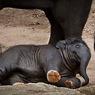 Toddler Mali topples! by Chris Dowd