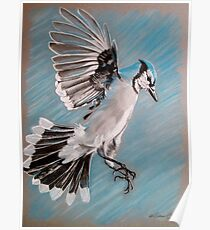 """""""Blue Jay"""" Poster"""