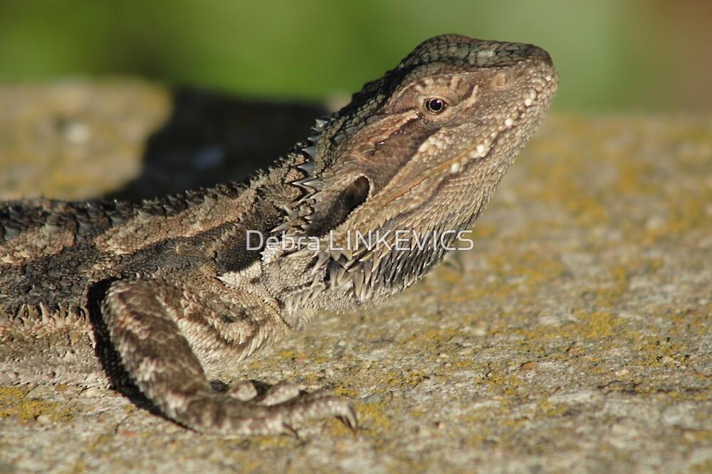 ~Lizard~ by Debra LINKEVICS