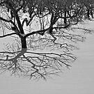 Roots by Sandra Guzman