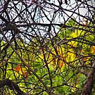 Canadian Autumn Through The Branches by Heather Friedman