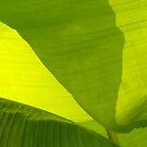 Backlit Banana Plant by Anna Lisa Yoder