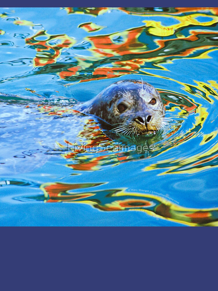 Harbor Seal in reflected color by LivingSeaimages