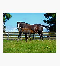 Horses - Special Time Photographic Print
