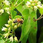 The Honey Bee by WildestArt