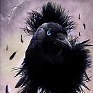 The Crow by shall