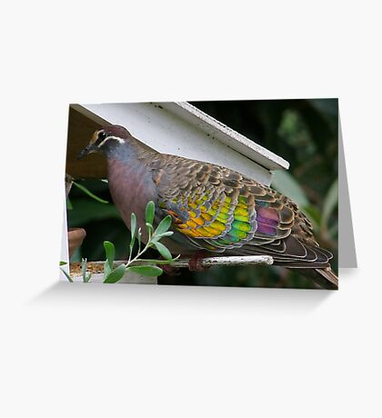 Bronzewing Pigeon two Greeting Card