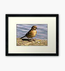 Young Bird Framed Print