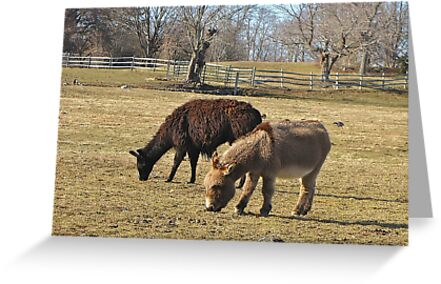 An Unlikely Pair by Nancy Richard