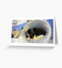 Devonshire cat asleep Greeting Card