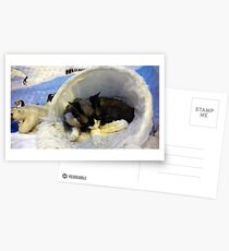 Devonshire cat asleep Postcards