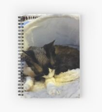 Devonshire cat asleep Spiral Notebook