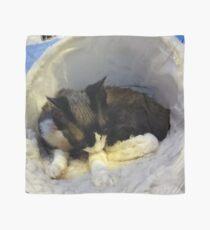 Devonshire cat asleep Scarf