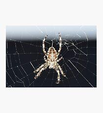 Arachnid Photographic Print